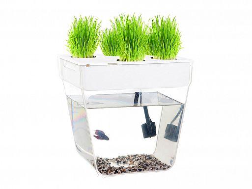 1. Акваферма AquaFarm