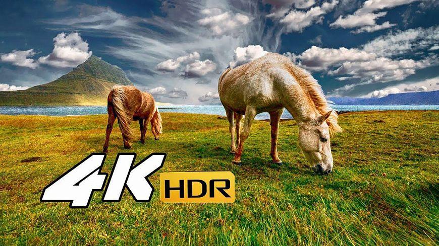 Современные файловые и потоковые форматы видео